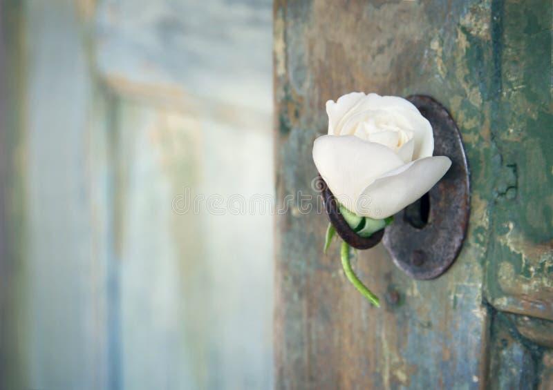 Zielony stary drewniany drzwi z białą różą zdjęcia stock