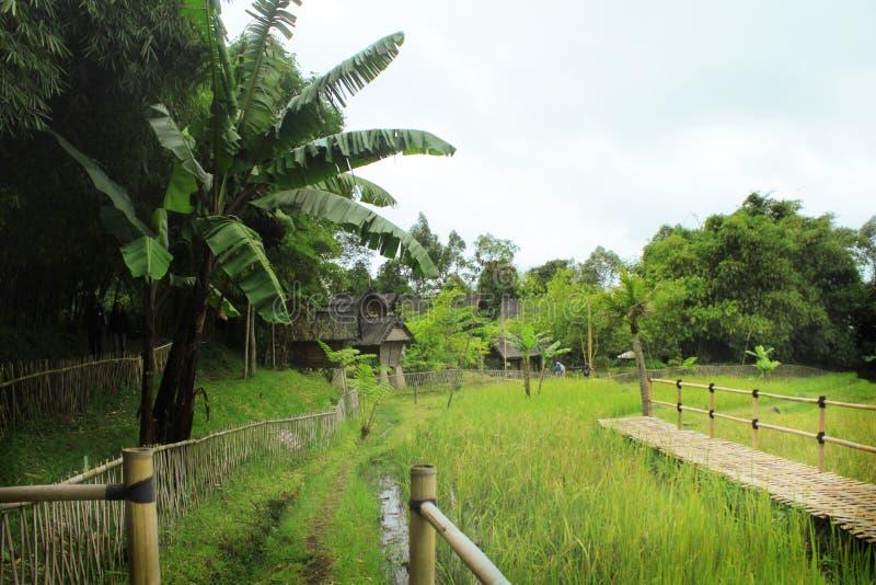 Zielony Sundanese fotografia stock