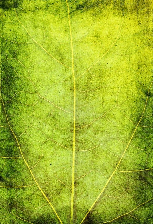 zielony tła grunge obraz stock