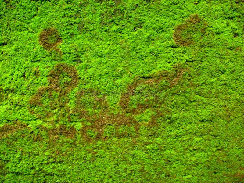 zielony tła moss obrazy stock