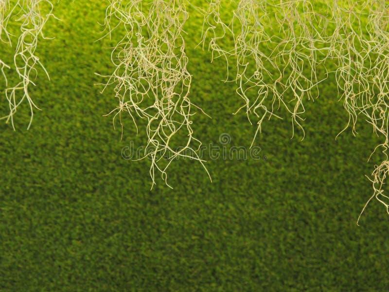 Zielony tło obrazy stock