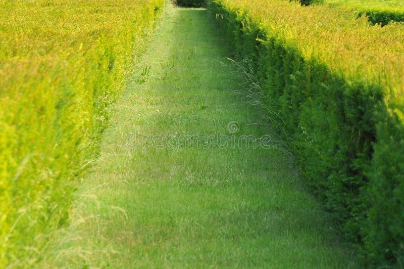Zielony tło fotografia stock