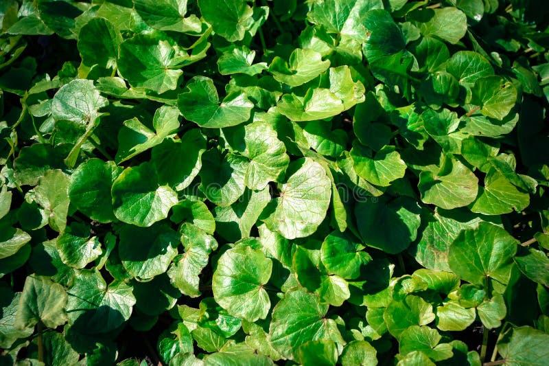 Zielony tło z round liść roślinami zdjęcie royalty free
