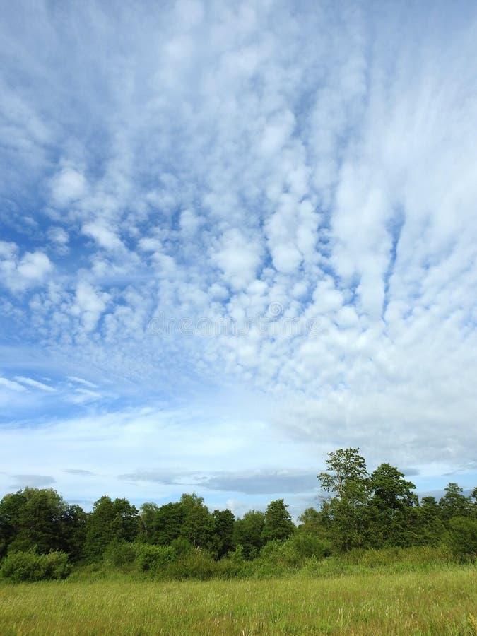 Zielony teren i zachmurzone niebo, Litwa obraz royalty free