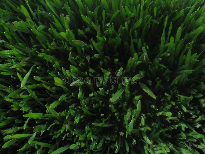 Zielony trawiasty dywan zdjęcie stock