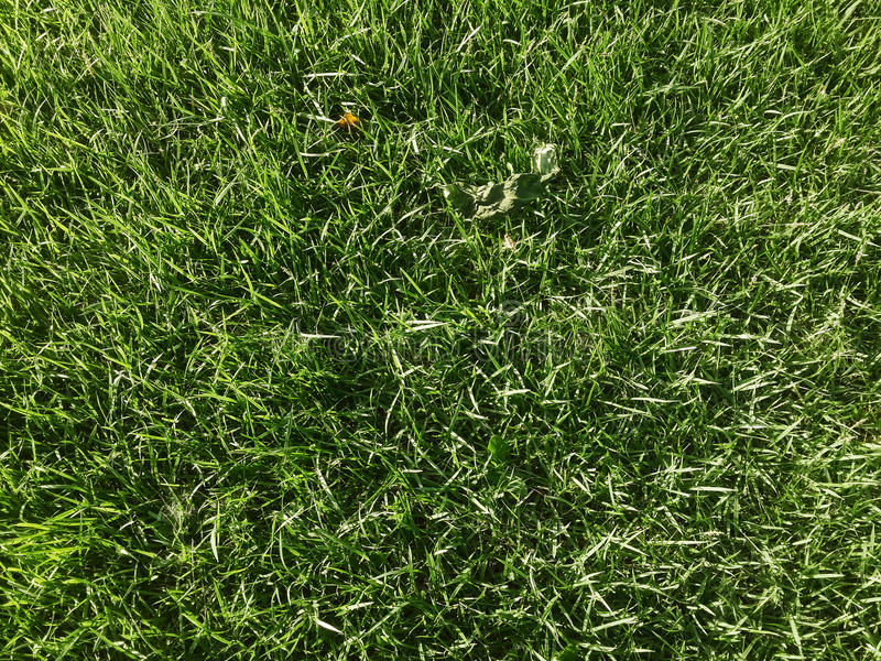 zielony trawnik fotografia royalty free