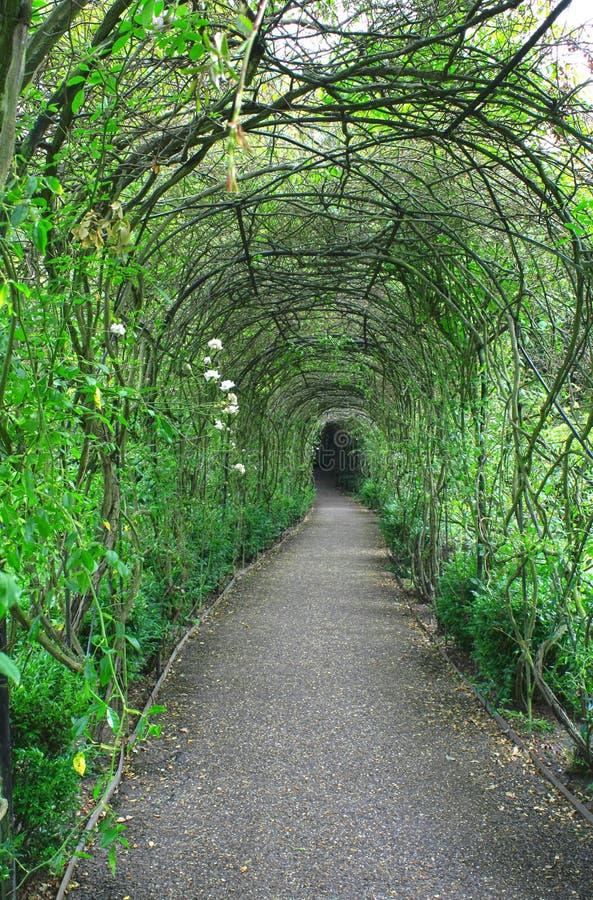 zielony tunel fotografia royalty free