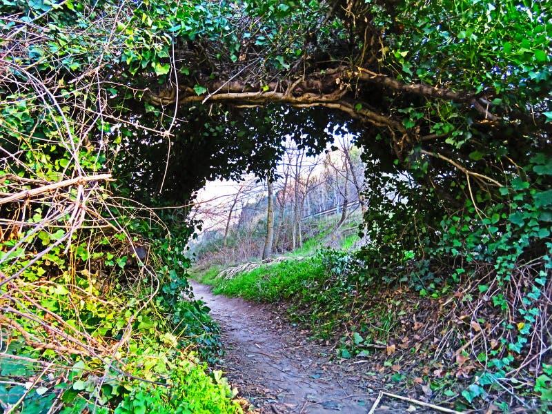 zielony tunelu obrazy stock