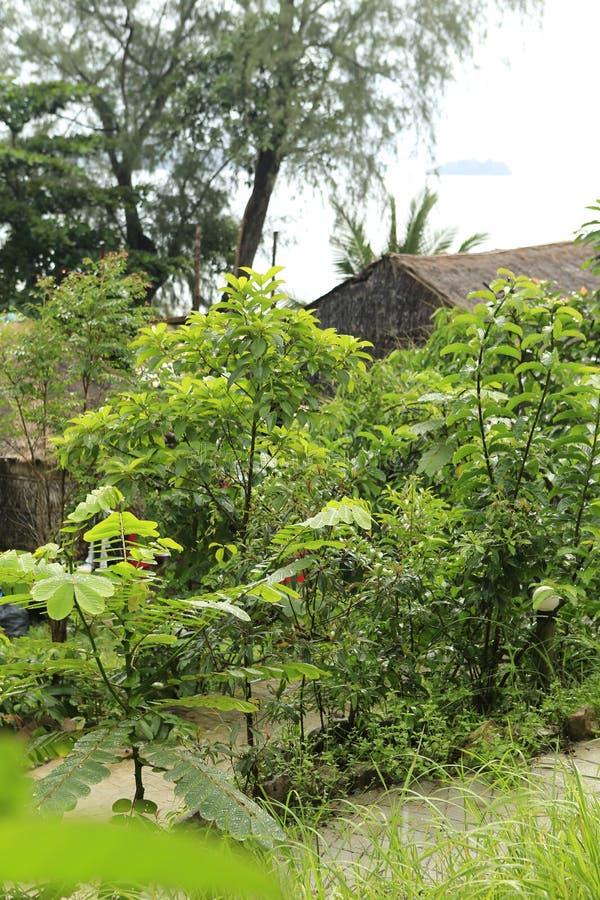 Zielony urlop w dżungli fotografia royalty free
