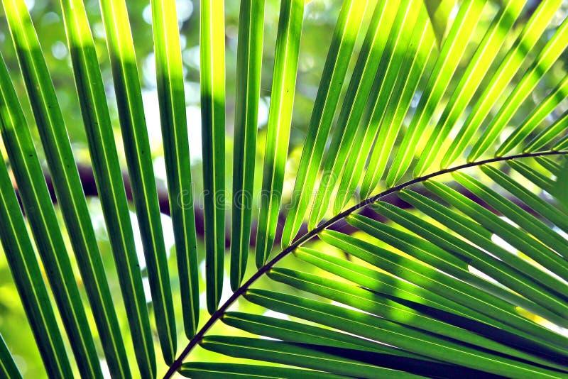 zielony urlopu zdjęcie stock