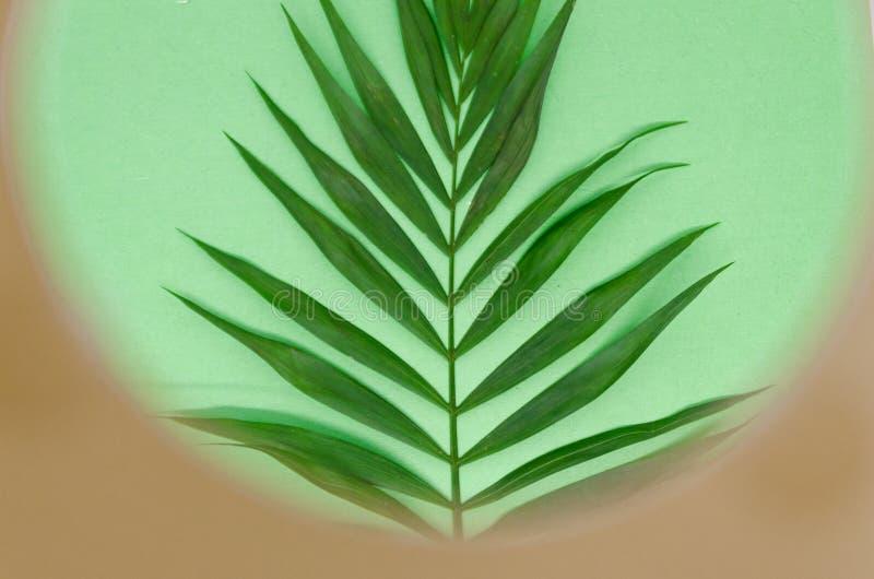 zielony urlopu fotografia royalty free