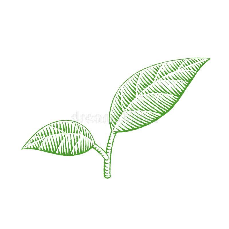 Zielony Vectorized atramentu nakreślenie liście Ilustracyjni royalty ilustracja