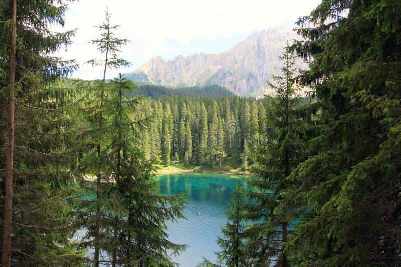 zielony Włoch raju pine drewna obraz royalty free