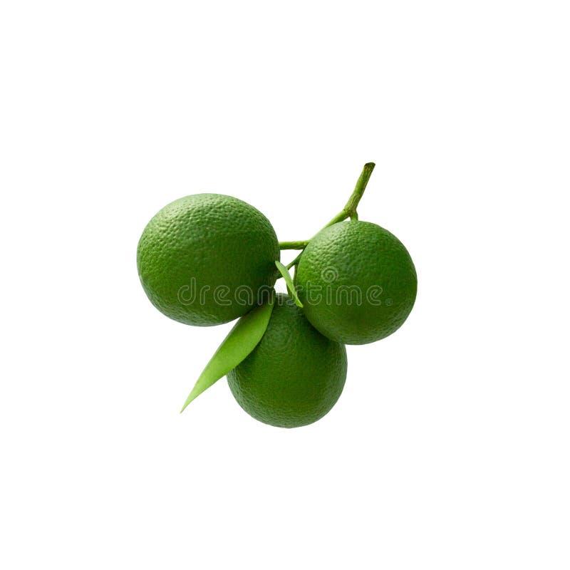 Zielony wapno na gałąź z liśćmi Odizolowywającymi na białym tle obraz royalty free