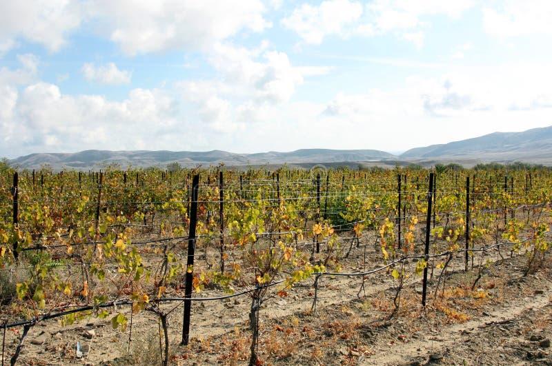 Zielony winnicy krajobraz, cloudscape i mountais, obrazy royalty free