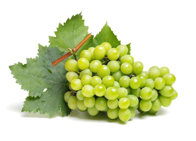 Zielony winogrono obrazy royalty free