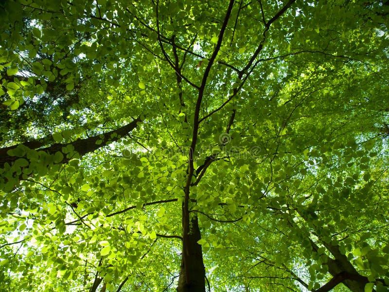 Zielony wiosna las obrazy stock