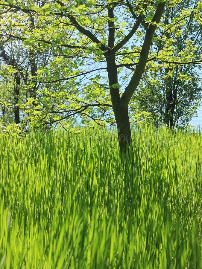 Zielony wiosna las w s?o?ce promieniach obrazy stock