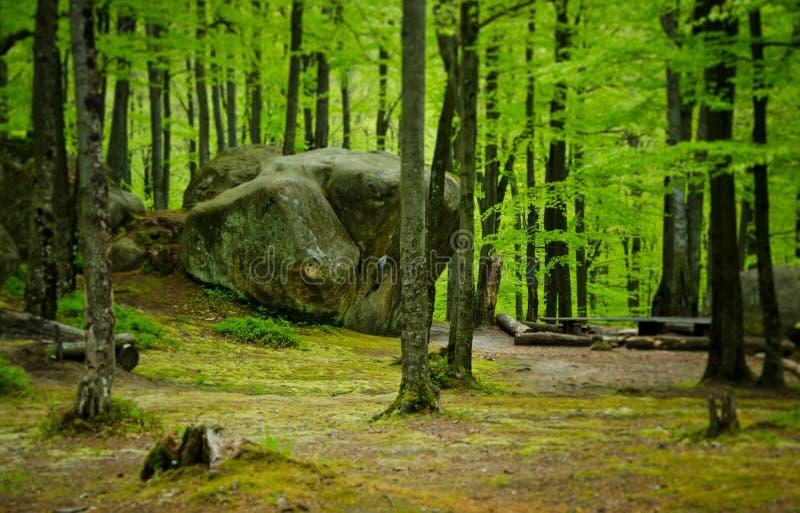 Zielony wiosna las w zachodnim Ukraina obraz stock