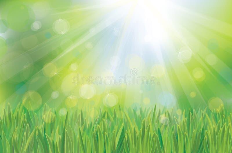 Zielony wiosny tło ilustracja wektor