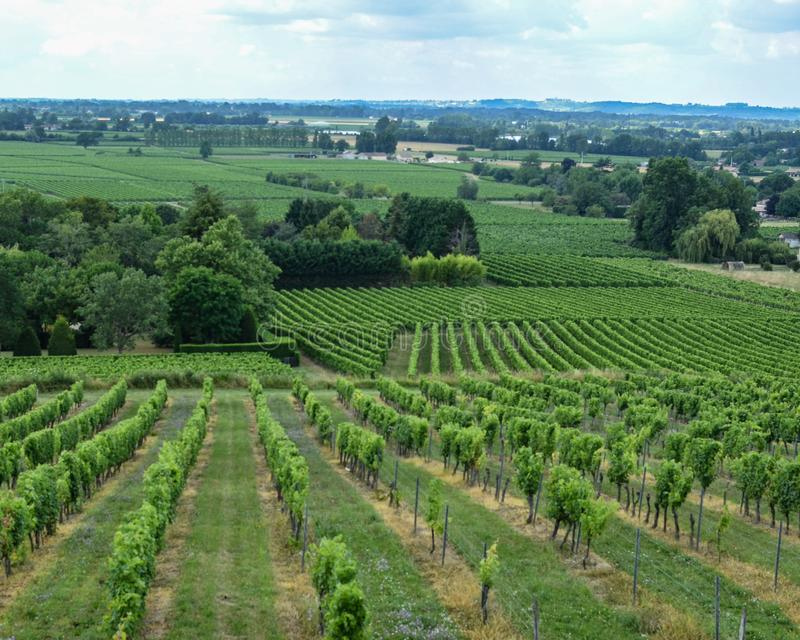 Zielony wytwórnia win widok zdjęcie stock