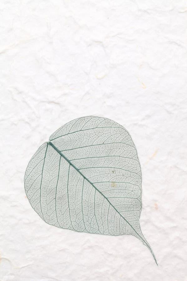 Zielony zredukowany liść zdjęcie royalty free