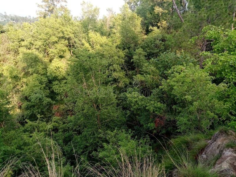 Zielony zwarty las tropikalny obrazy royalty free