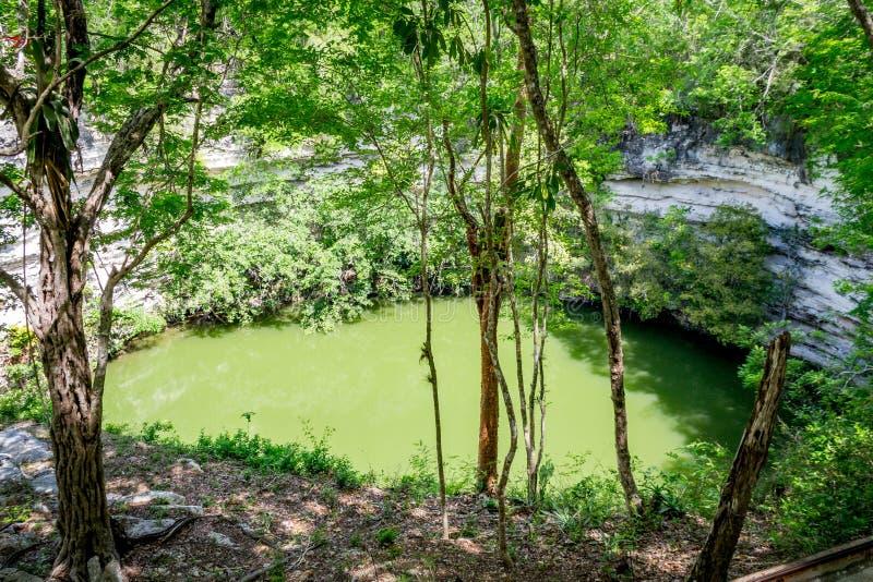 Zielonych alg wypełniający jezioro zdjęcia royalty free
