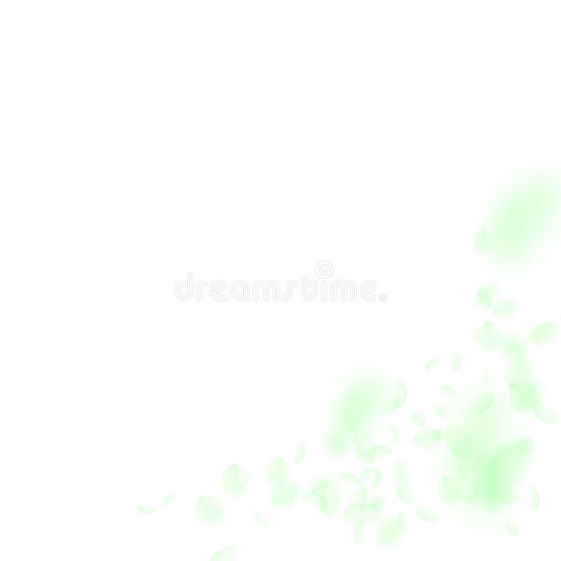 Zielonych kwiat?w p?atk?w spada puszek Ciekawy romantyczny ilustracja wektor