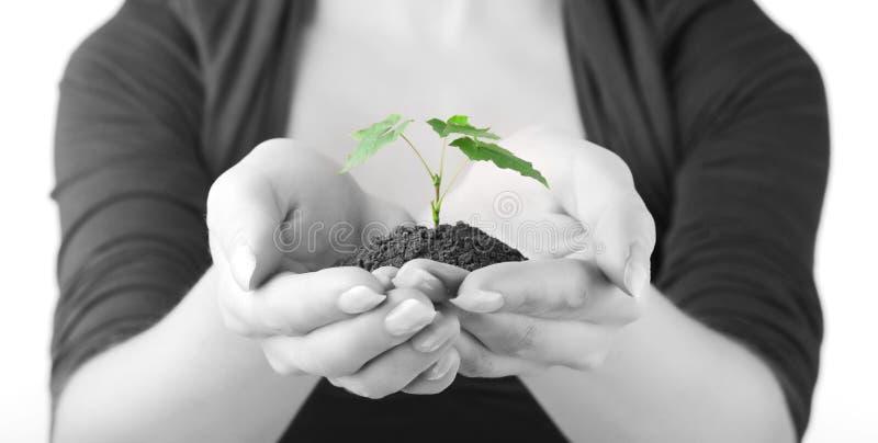 zielonych ręk kiełkowa kobieta fotografia royalty free