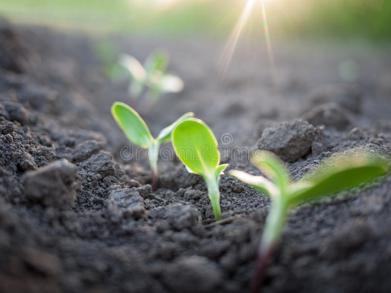 Zielonych rośliien przyrost obraz royalty free