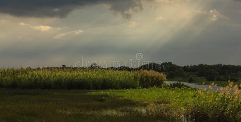 Ziemia po padać zdjęcie royalty free