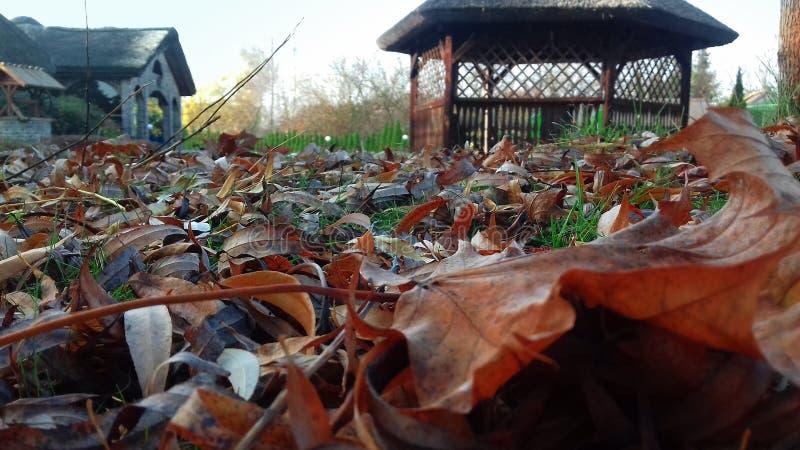 ziemia spadać liść Jesieni fotografia fotografia stock