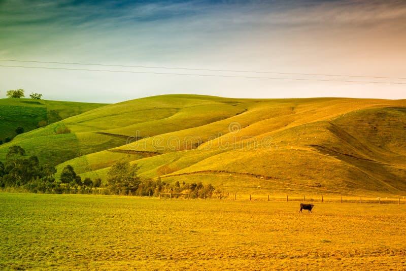 Ziemia uprawna w Australia zdjęcia stock