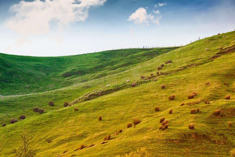 Ziemia uprawna w Australia zdjęcie stock