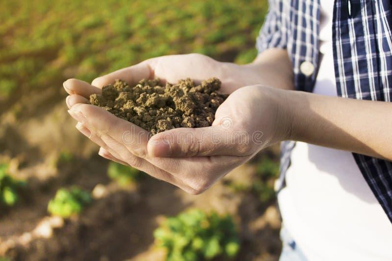Ziemia w r?ce, palma, kultywowa? brud, ziemia, ziemia, br?zu gruntowy t?o Organicznie ogrodnictwo, rolnictwo ?rodowiskowa tekstur zdjęcia royalty free