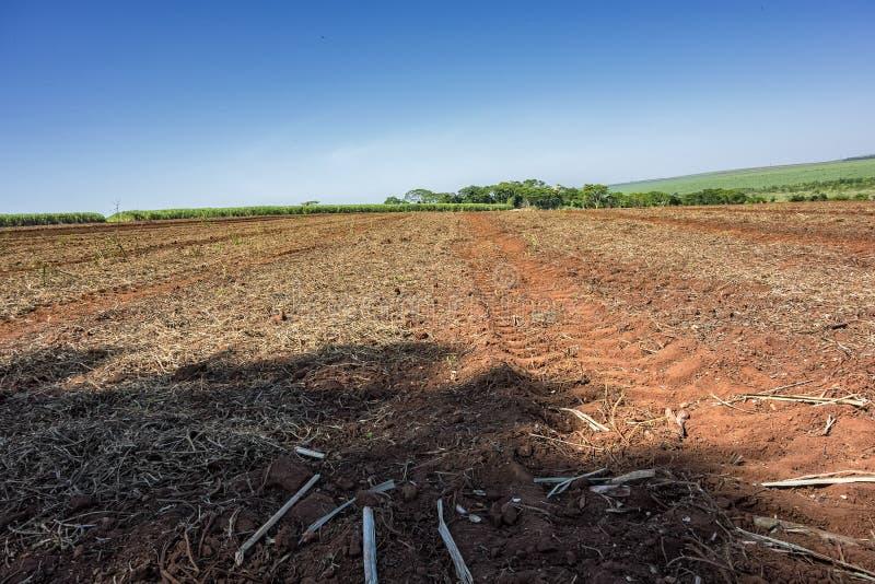 Ziemia wkrótce po trzciny cukrowa żniwa na słonecznym dniu w Sao Paulo, Brazylia zdjęcie stock
