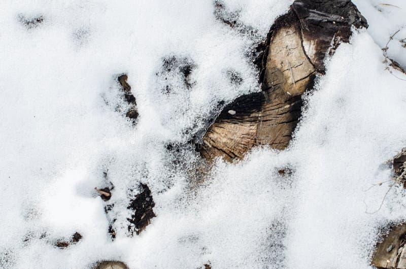 Ziemia zakrywająca z śniegiem zdjęcie royalty free