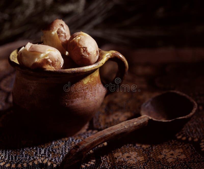 ziemniak zdjęcie royalty free