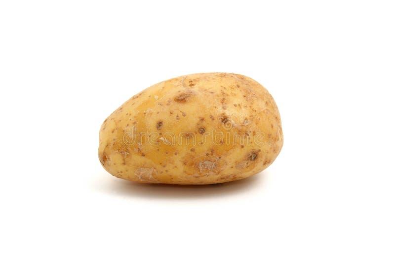ziemniak obrazy royalty free