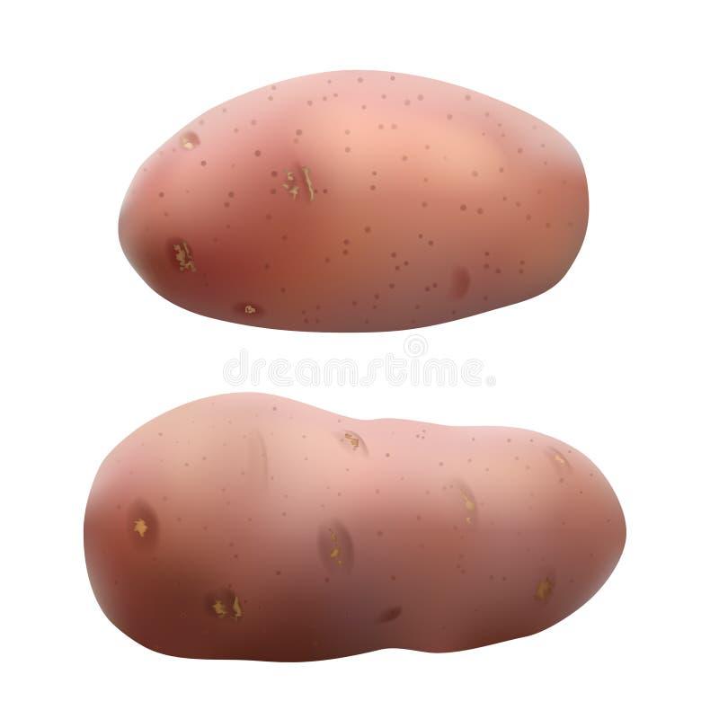 ziemniaki bia?e royalty ilustracja