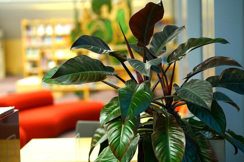 Zierpflanze in der Nationalbibliothek von Lettland lizenzfreies stockbild