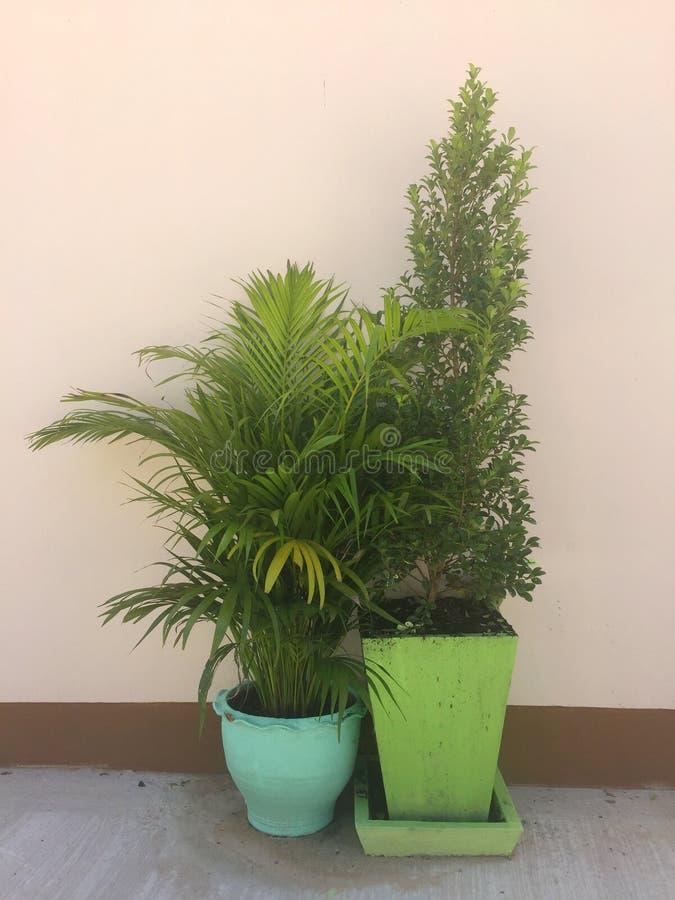 Zierpflanzen verzierten außerhalb der Hausmauer stockfoto
