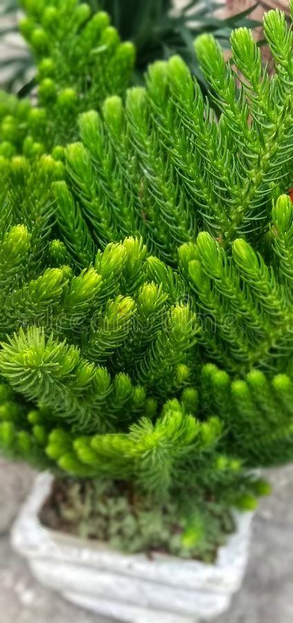 Zierpflanzen werden in den Raum gelegt und die Klimaanlage säubern stockfotografie