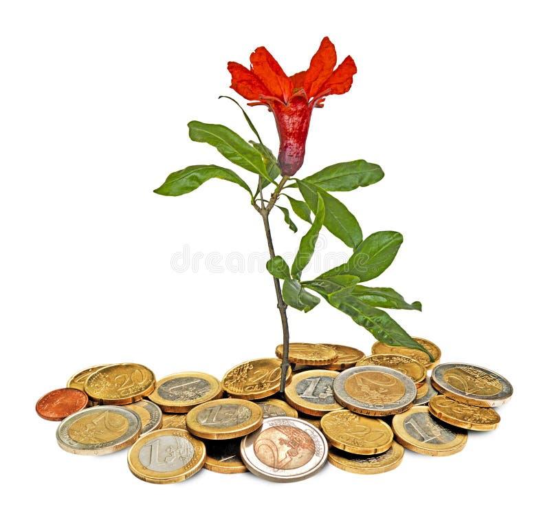 Zierpflanzenbau von den Münzen stockfotografie