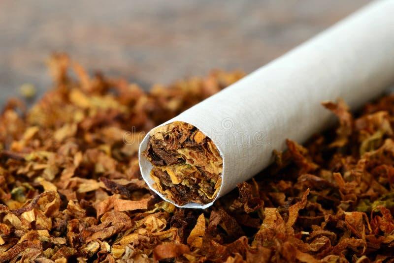 Zigarette/Tabak stockfoto