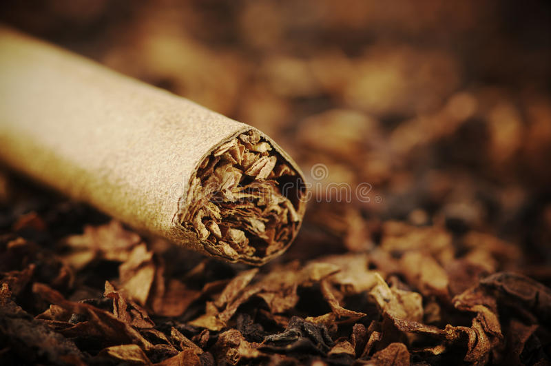 Zigarre und Tabak stockfoto
