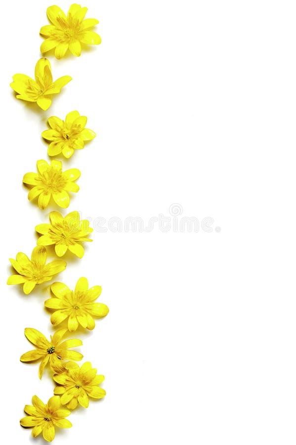 Zigzag-shaped raw of bright yellow flower. Copy space. Vertical. A zigzag-shaped raw of bright yellow flower. Copy space. Vertical stock image