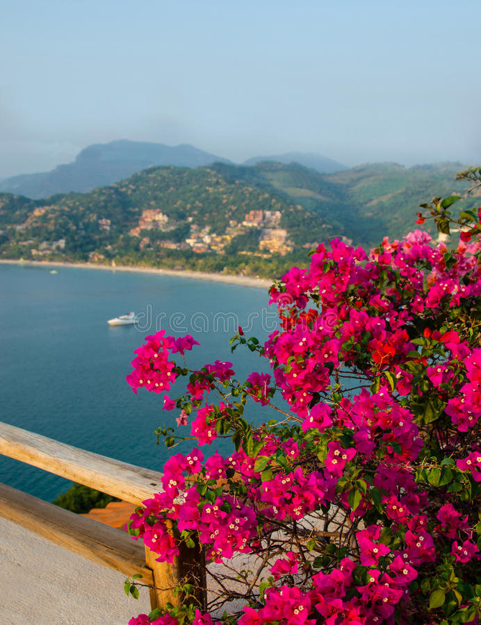 Zihuatanejo Bay and Bougainvillea At Sunset stock images