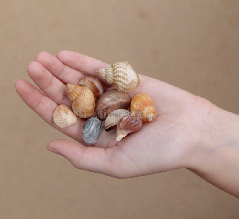 Zij verkoopt Overzeese Shells royalty-vrije stock fotografie